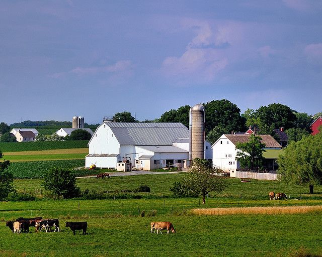 The Amish farms in Lancaster County Pennsylvania were beautiful and so well ordered, just as the Amish are.