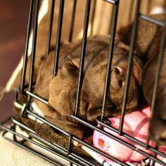 How To Crate Train a Puppy: Day, Night, Even If You Work: CHECK HERE TOO FOR WEEKEND CRATE TRAINING: http://pets.webmd.com/dogs/guide/why-crate-train-dog?page=4#1