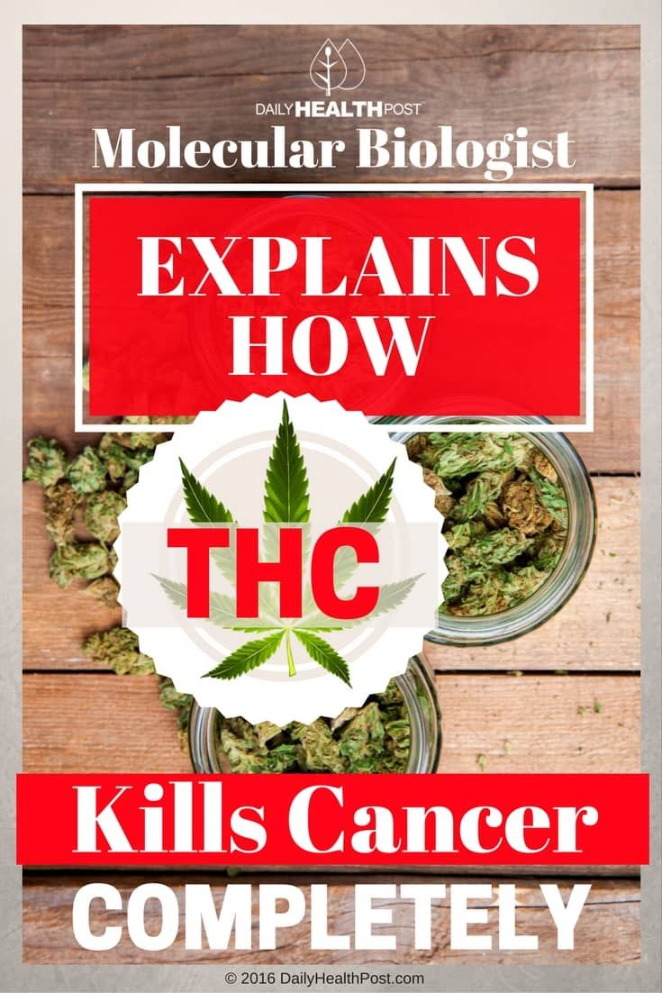 From Compultense University in Madrid, Spain, Dr. Christina Sanchez has been studying the anti-tumor effects of THC, the main psychoactive component of cannabis for over a decade.