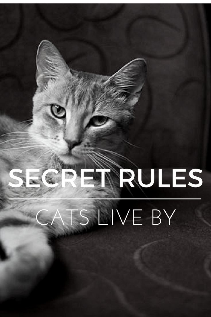 25 Secret Rules All Cats Seem to Live By: https://kittyclysm.com/cat-secret-rules/