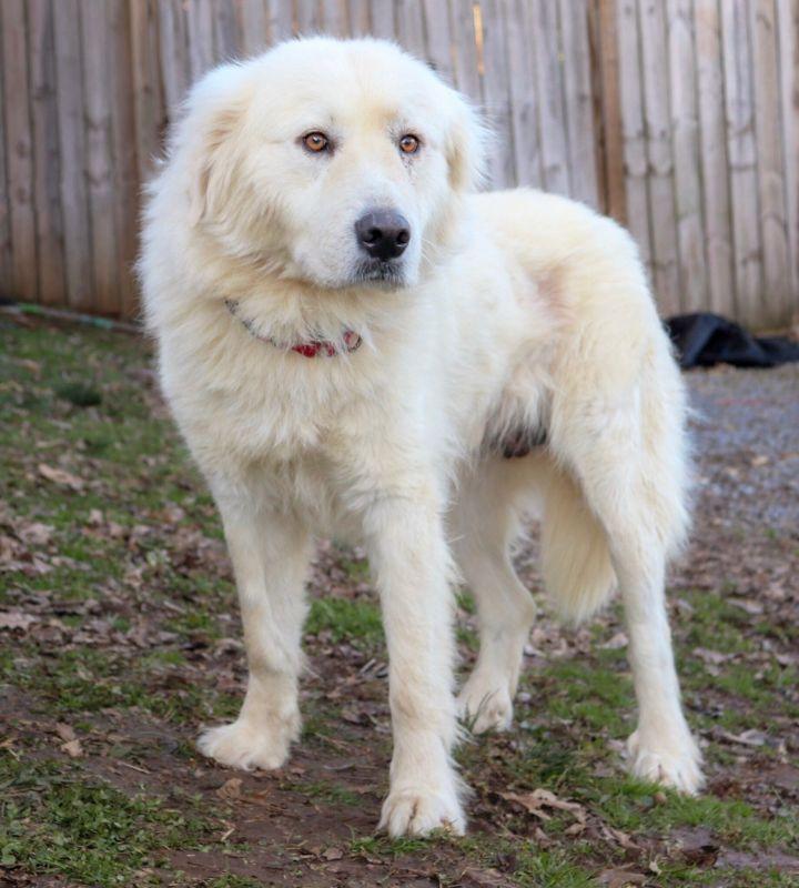 Somewhat Awry Big Fluffy Dog Rescue Big Fluffy Dogs Dog Adoption