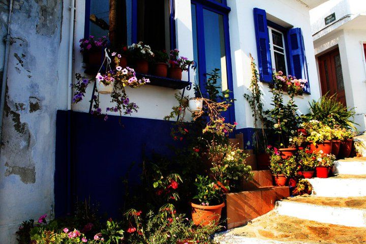 flower pots and blue shutters