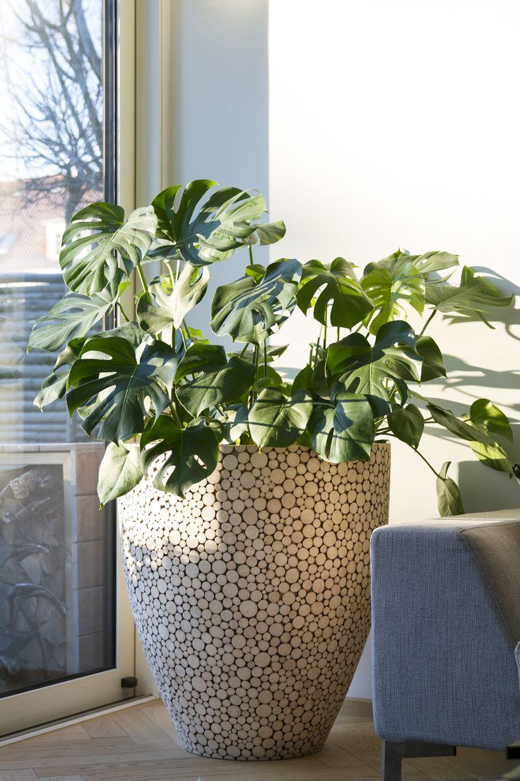 Supersized planter...  www.instagram.com/designnestcph/  www.designnestcph.dk