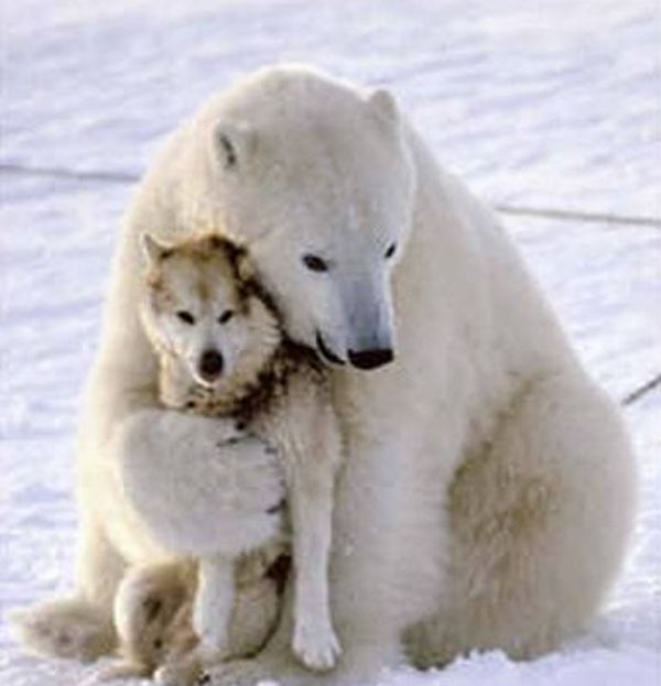 Image detail for -Unlikely Animal Friends