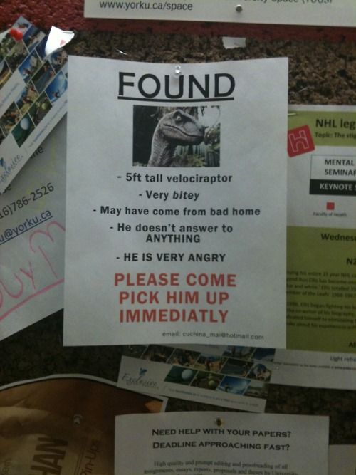 Find this dino!