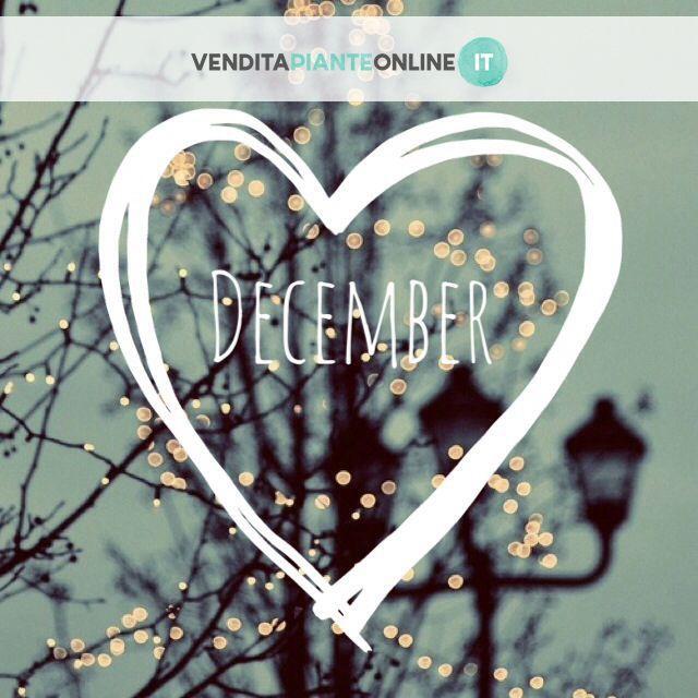 Benvenuto Dicembre!! #venditapianteonline #inverno #ilmiodicembre #Xmasinspiration #ViviIlNatale
