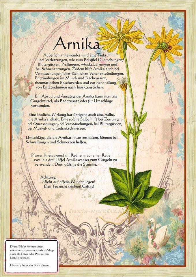 Arnika http://www.kraeuter-verzeichnis.de/