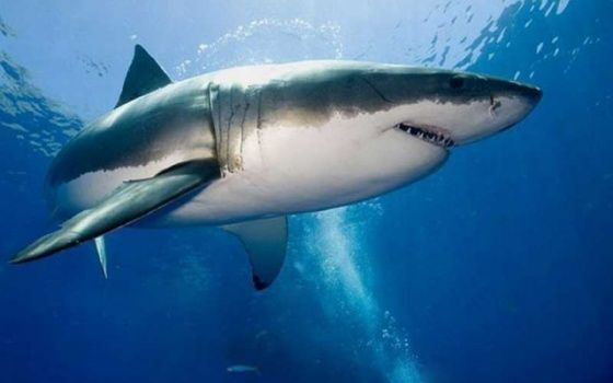 Tantv.kz - Двое подростков в США остались инвалидами после нападения акул