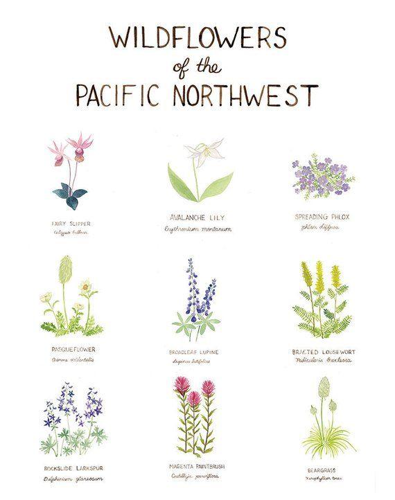 Pacific Northwest Wildflowers Art Print / Washington Art