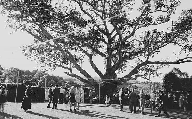 An amazing garden wedding, with a stunning Figtree. Tweed Hinterland Wedding - Velleron House - Nat McComas. Tweed Wedding Celebrant. Byron Bay Wedding Celebrant