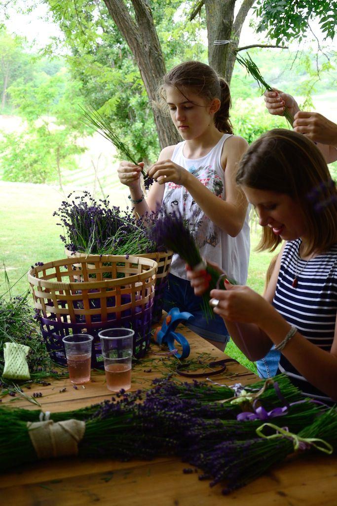Készülnek a csokrok __________ levendula, lavender, diy, craft, csináld magad, ötlet, kézműves, dísz, ajándék, levendulás, nyár, nyaralás, Balaton, Kőröshegyi Levendula, Balatonföldvár, program, családi, gyerek