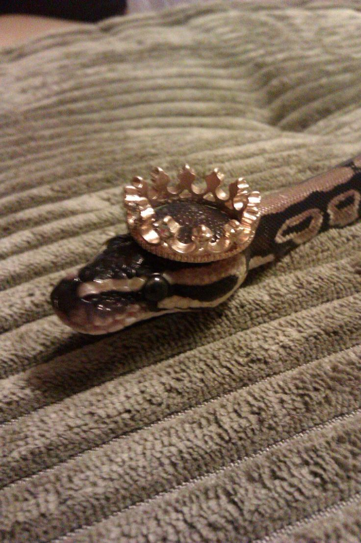 THE SNAKE HAS A CROWN I AM SO DONE