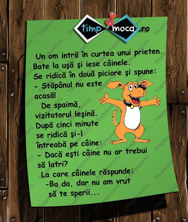 TimpMoca.ro - În vizită