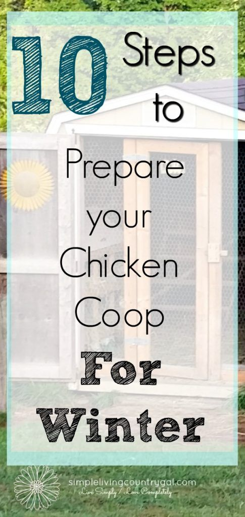 Prepare your chicken coop for winter by following these few easy steps.  Safe, clean and healthy hens produce the best eggs.