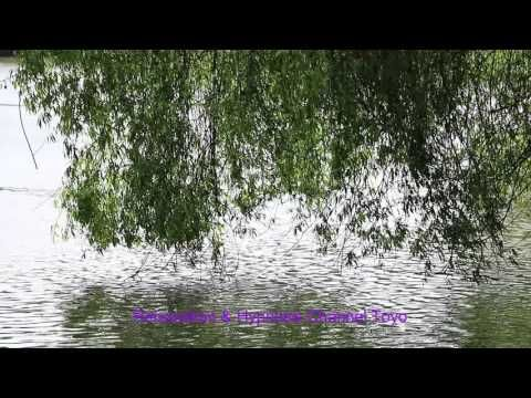 ♫♫♫ Weeping willow on the lake Relaxation Music Zen ♫♫♫ - YouTube