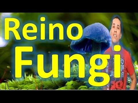 Aula 11: Reino Fungi (Características, Nutrição, Reprodução) - YouTube