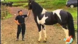 Resultado de imagen para entrenadores de caballos finos