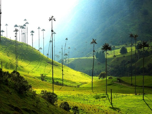 Valle-Cocora | Colombia