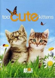 Too Cute Kitten Cam LIVE