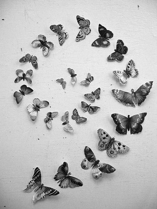 butterflies butterflies: Butterfly, Idea, Animals, Inspiration, Butterflies, Art, Things, Photo