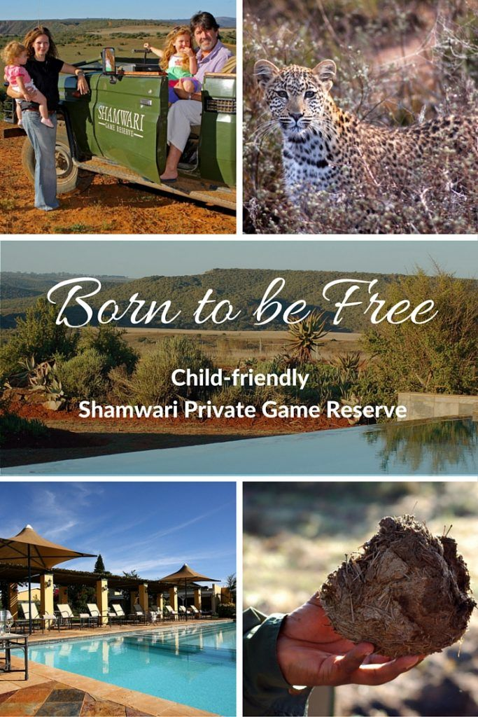 The child-friendly Shamwari Private Game Reserve is home to Africa's Big 5, elephant, rhino, buffalo, lion and leopard.
