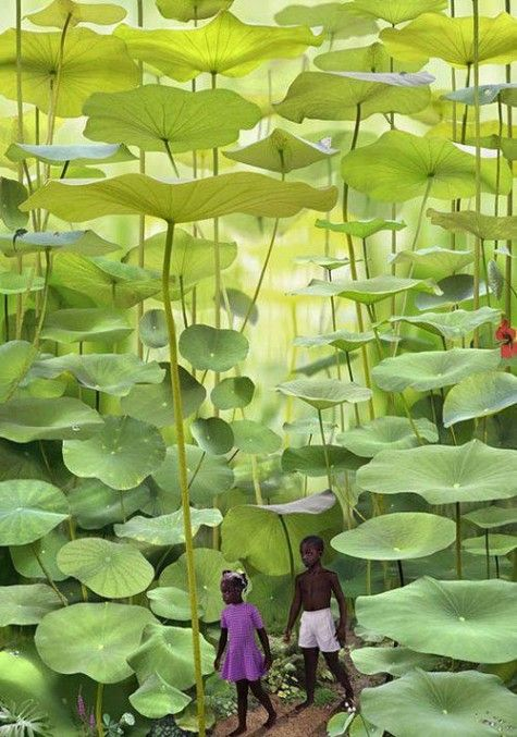 Se cacher parmi les plantes | #Jamaique |