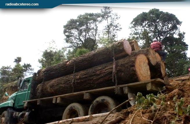 Policía detuvo a tres e incautó madera supuestamente de zona protegida
