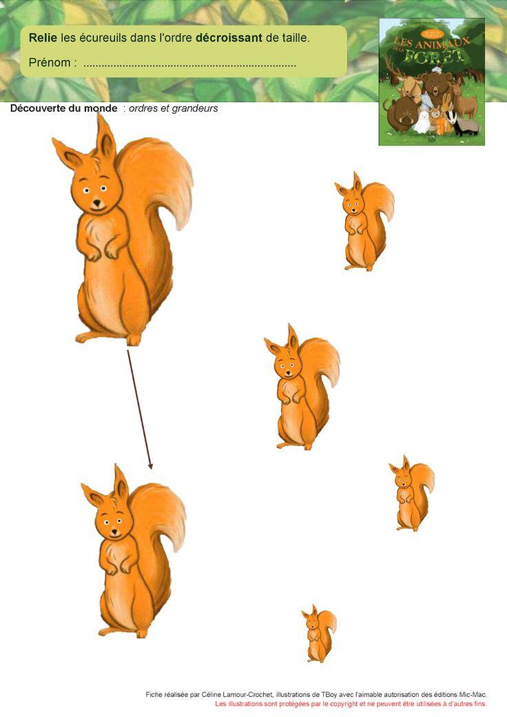 eekhoorn van groot naar klein