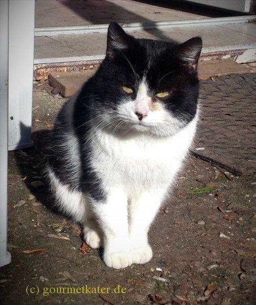 Kater Teddi #katze #kater #cat