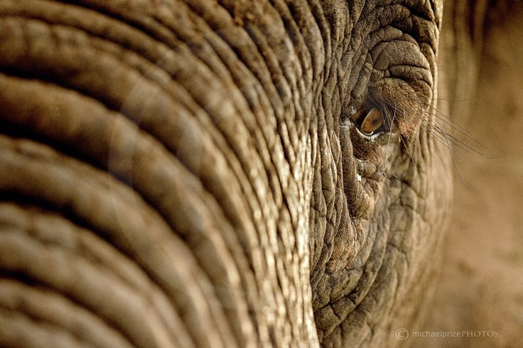 """An African Icon's Eye"" by Michael Price on 500px"