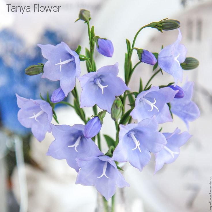 Купить Колокольчики ручной работы - сиреневый, сиреневые цветы, фиолетовые цветы, колокольчики, колокольчики из глины