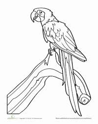 170 best images about araras e passaros on pinterest for Scarlet macaw coloring page