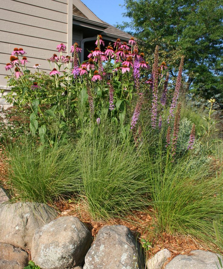 Native plants and boulders