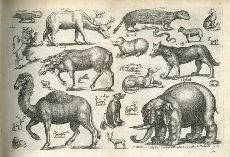 Book of Four-Footed Beasts-1658-64