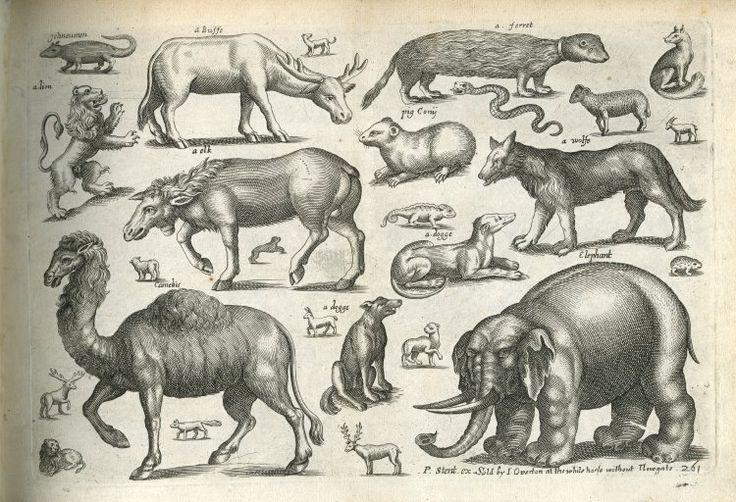 marinni   Старинные изображения животных.A Book of Four-Footed Beasts-1658-64