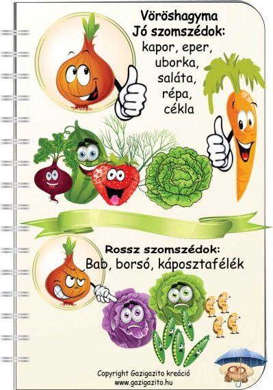 hagyma - növénytársitás