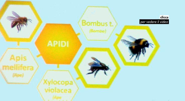 Allergie, attenti ad api, vespe e calabroni :http://www.ibiscomunicazione.it/allergie-attenti-ad-api-vespe-e-calabroni/