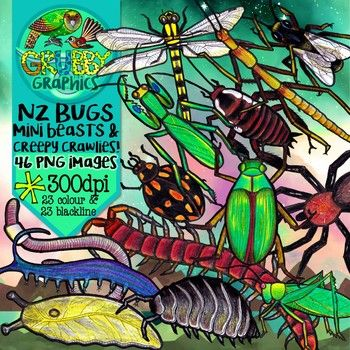 This set of native NZ creepy crawlies contains a range of insects, spiders and invertebrates - perfect for supporting your inquiries into Aotearoa's fascinating 'mini beasts!' This set contains 46 images (23 colour and 23 blackline) as high quality (300 dpi) PNGs with transparent backgrounds.