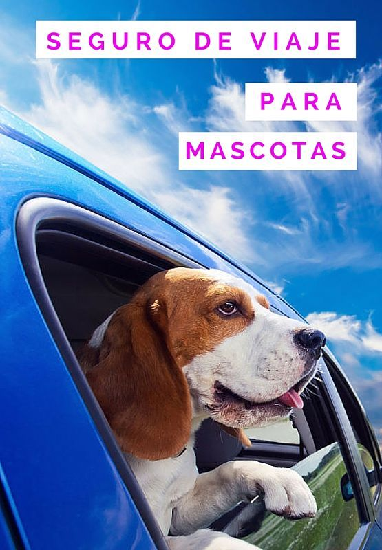 Seguro de viaje para perro ¿Necesito Contratar un Seguro de Viaje para Mascotas? https://mindfultravelbysara.com/seguro-de-viaje-para-mascotas/