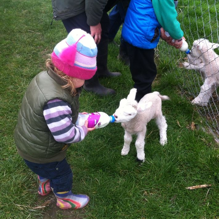Bottle feeding lambs, Kakanui Check out what we got up to on our lambing adventure in our blog: http://www.thebusstop.co.nz/blog/our-kakanui-lambing-adventure