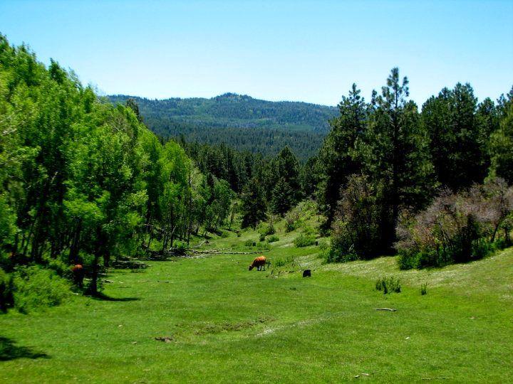 Banded Peaks River Ranch http://www.durangoalpineproperties.com