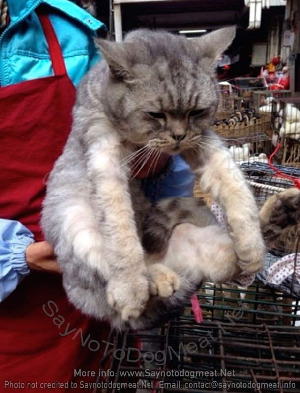 This cat is picked to be killed, cooked for a customer! Yulin, China www.SayNoToDogMeat.Net