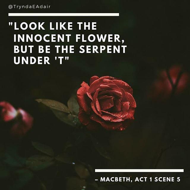 """Look like the innocent flower but be the serpent under 't.""  #Macbeth Act 1 scene 5. #ShakespeareSunday photo by #MilosTonchevski on #Unsplash.  #ShakespearQuote #WilliamShakespeareQuote  #WilliamShakespeare #QuotesOfInstagram #quote - https://www.instagram.com/p/BexwbMnhXJD/"