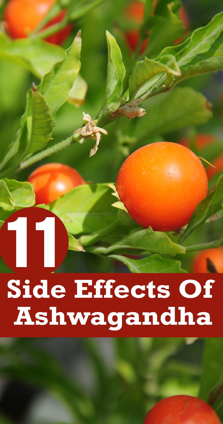 What Are The Side Effects Of Ashwagandha?