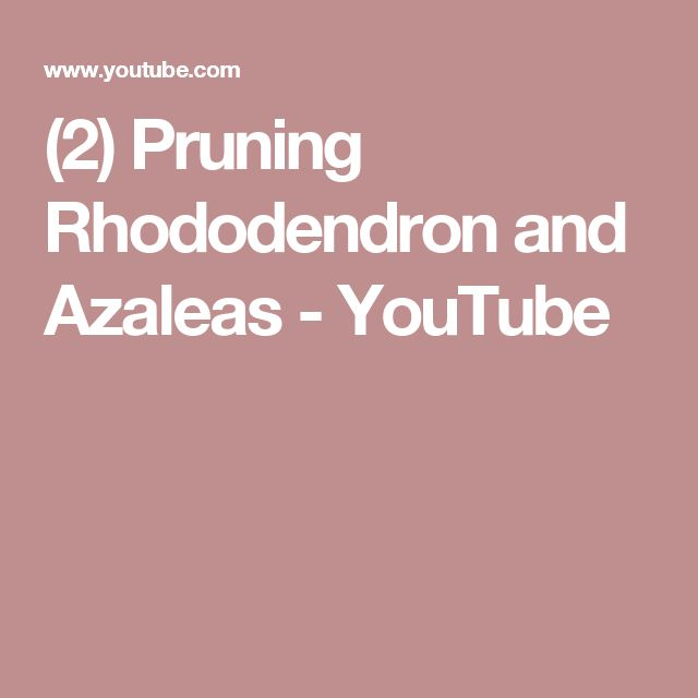 (2) Pruning Rhododendron and Azaleas - YouTube