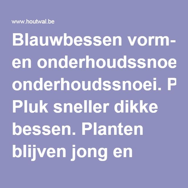 Blauwbessen vorm- en onderhoudssnoei. Pluk sneller dikke bessen. Planten blijven jong en groeikrachtig door snoei.
