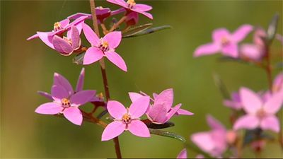 Australian Native Garden Inspiration - Gardening Australia - Fact Sheet: Native Plant Walk