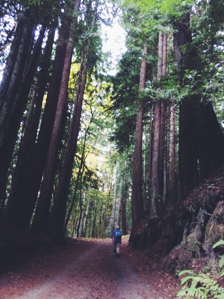 Forest of Nisene Marks, Aptos, California. Beautiful redwoods prettier in the fall.