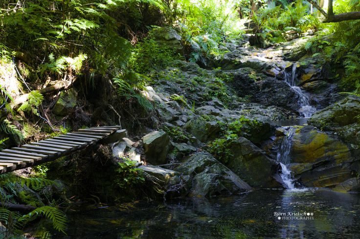 Just a 15 minute walk from the Wild Spirit backpackers you will find a secluded little waterfall in the middle of Nature's Valley.
