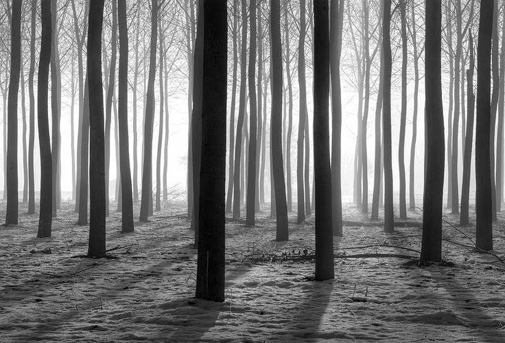 Lacchiarella, Lombardia Winter in a small wood (boschina), Autor: Fiorenzo Carozzi